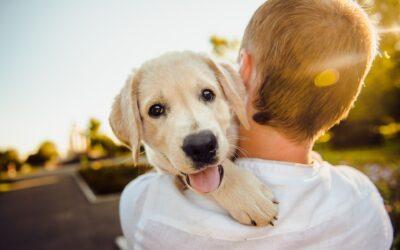 Essential Foods giver din hund et langt og sundt liv