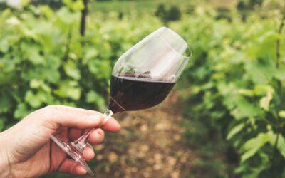 Prøv kræfter med vin, der slår benene væk under dig